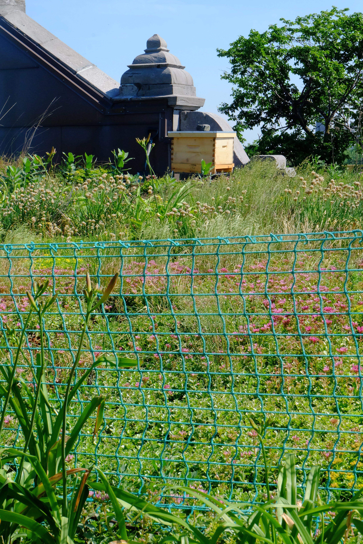 Ruche ALEVEOLE - la ruche au ;ilieu de la végétation sur le toit